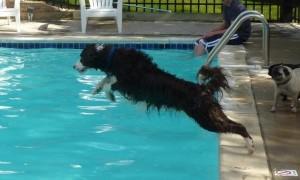 doggy swim