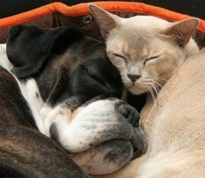animal,love,cat,dog,goodnight,kiss