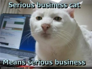 business-cat-is-serious